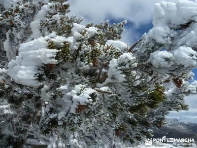 Siete Picos - Parque Nacional Cumbres del Guadarrama;parque natural de la sierra calderona parque na